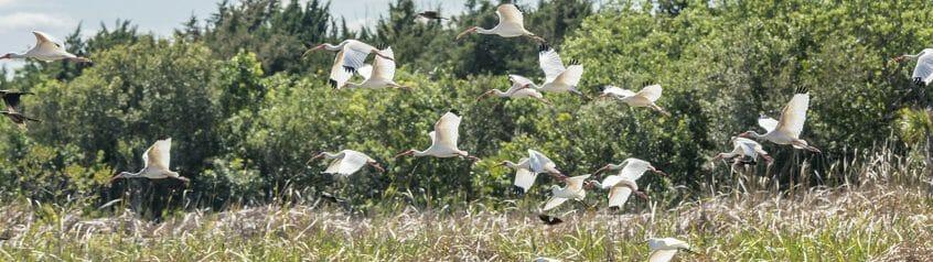 viera wetlands wildlife viewing