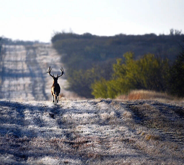 South Texas Sendero Digiscoping