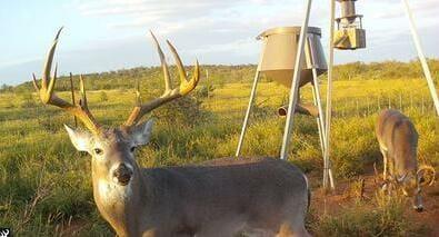 Creating Deer Hubs - Automatic Deer Feeder