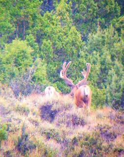 Digiscoped buck