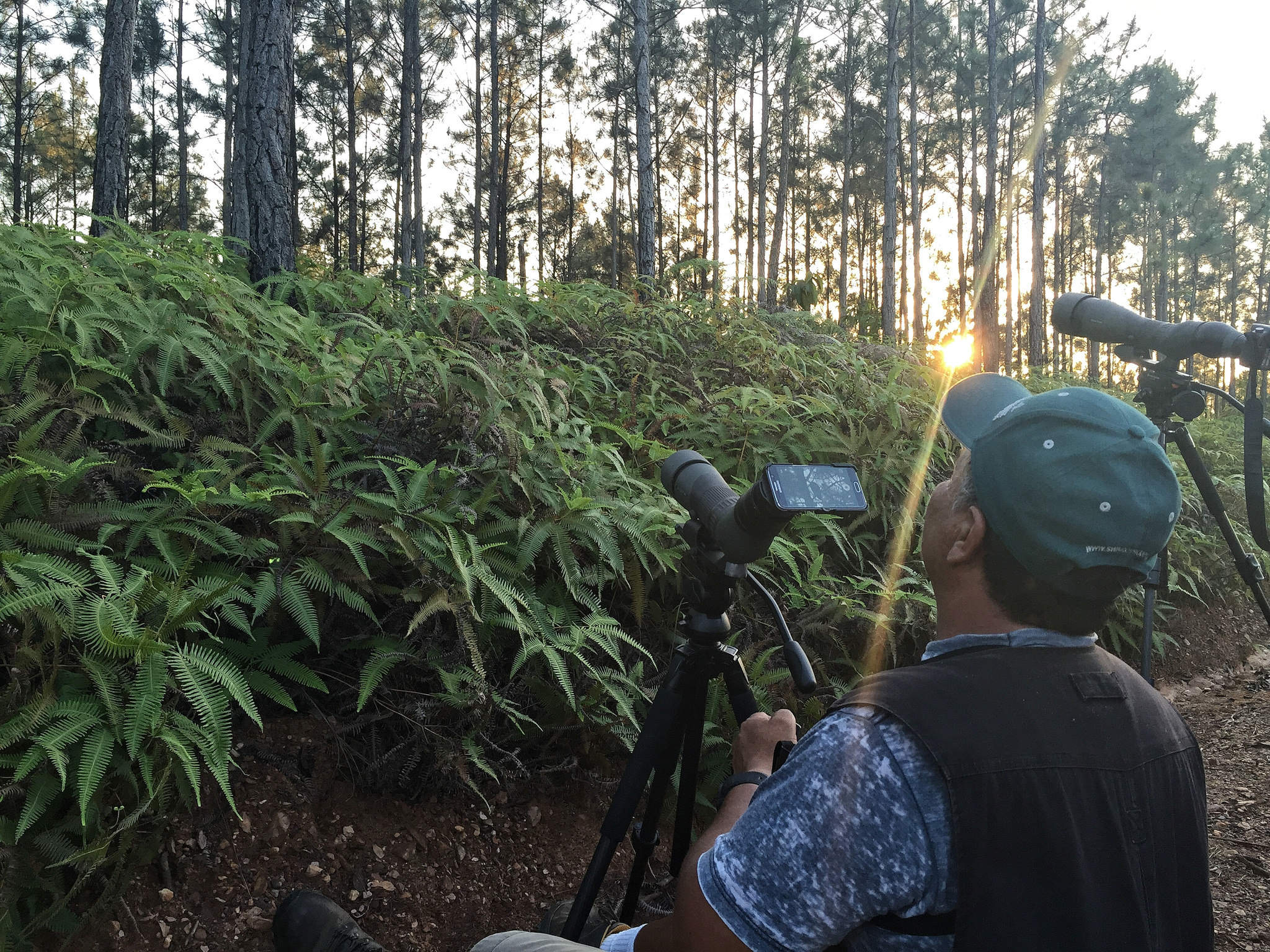 Digiscoping in the Forest