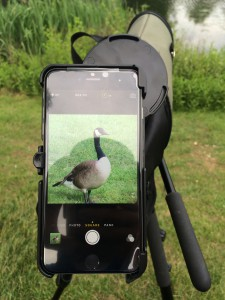 Digiscoping Geese with the iPhone 6 Plus