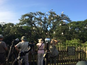 Digiscoping bird photography