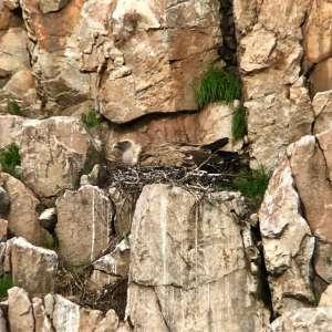 Birding for Griffon Vulture Nest