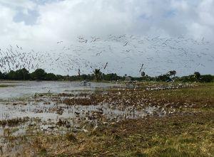 Flock of Water fowel