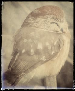 Fun with photo apps and digiscoping