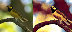 Digiscoping and photo editing