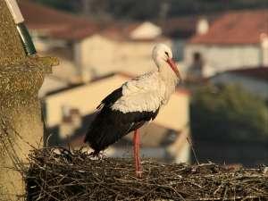 Birding in 2018 Stork