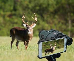 White tail deer digiscoping