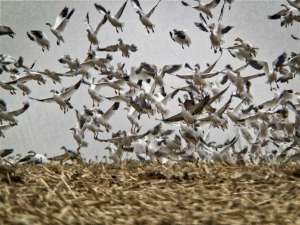 Digiscoping Slo Mo with your phone