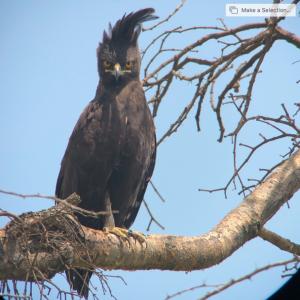 App for hunting phoneskope