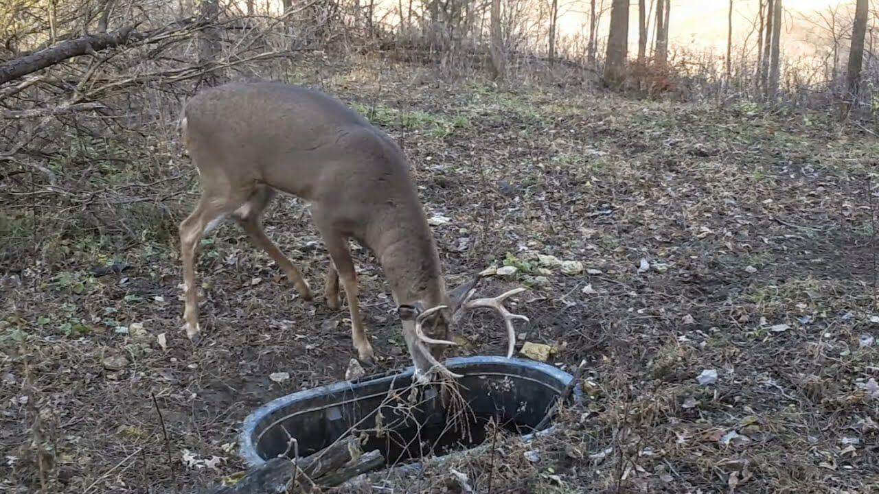 Creating Deer Hubs - Deer Water Hole