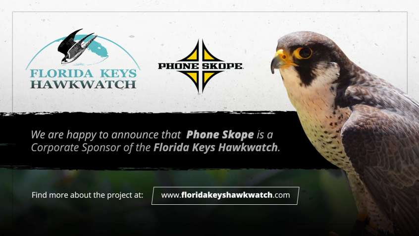Florida Keys Hawkwatch | Phone Skope Corporate Sponsor